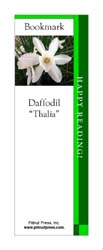 This bookmark depicts a Thalia Daffodil.