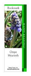 This bookmark depicts a Grape Hyacinth.